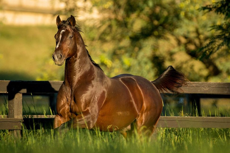 Sun Stud, Jabali, Paddock_11-04-17, QLD, Sharon Lee Chapman_0250