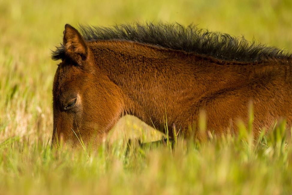 Foals_26-09-17, Newhaven Park, Sharon Lee Chapman_0061