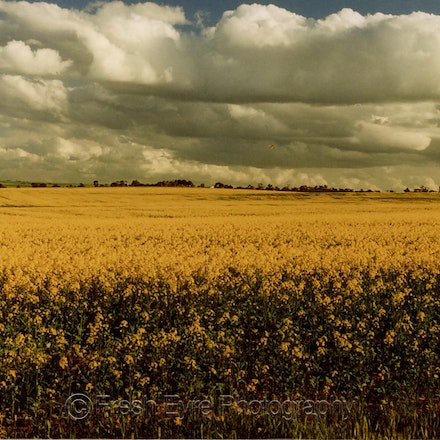 Clouds on canola_155_Kerri Cliff