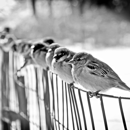 Finches in Central Park, New York City - Copyright © 2015 Melissa Fiene Photography. All rights reserved. All images created by Melissa Fiene are © Melissa...