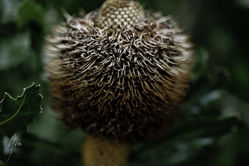 Spike Curl