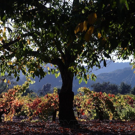 Wine Country - Napa Valley, Redwoods and in between.
