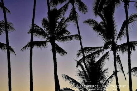 Sunset Palms - Location: Waikiki 