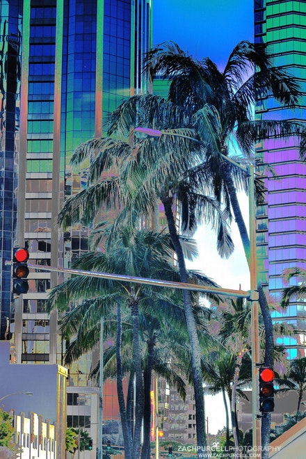 City Palms - Location: Downtown Honolulu