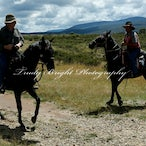 LMP&THR Snowy's 2015 - A mixture of images from the camp. Bugs, wildlife, camp, horses & landscapes.