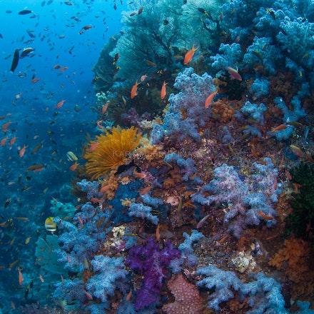 Whale Rock wonders, Raja Ampat - Whale Rock's beautiful underwater world, Raja Ampat, Indonesia.