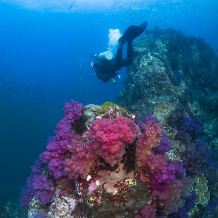Diver, Western Rocky 4 - A diver explores the Western Rocky dive site.