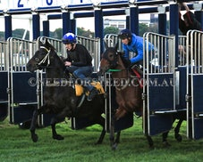 23 MAY RANDWICK JUMP OUTS