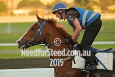 16 APRIL RANDWICK TRACKWORK