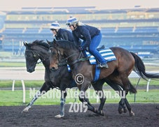 10 JULY RANDWICK TRACK WORK