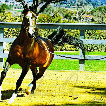 Simeon Shai - bay Arabian Stallion - The winner of the Triple Crown, World Champion, Canadian Champion and USA Champion in the same year, Simeon Shai was...