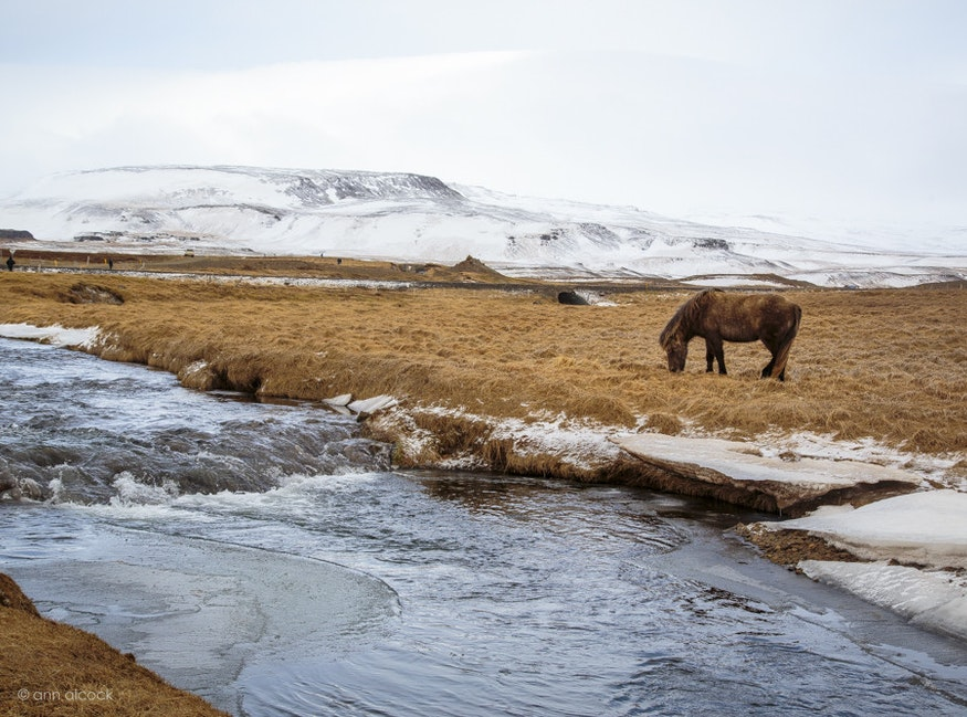 Iceland-100
