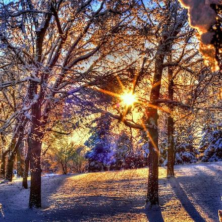 Peakin Thru the Trees - 2.2.2015 sunkengardenpioeneer (5)