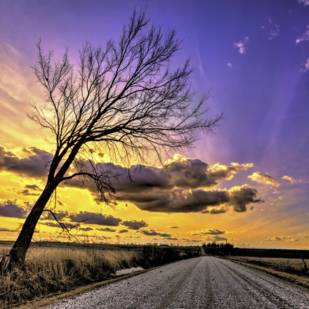 Fall Over  2.20.2016.2 - Fall Over. Purple skies highlight a bare tree leaning over a gravel road in southern Lancaster county. #nebraska #lancastercounty...